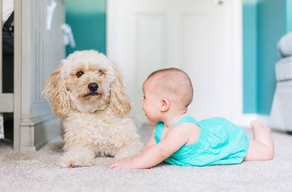 Nylon vs Polyester for Dog Baby