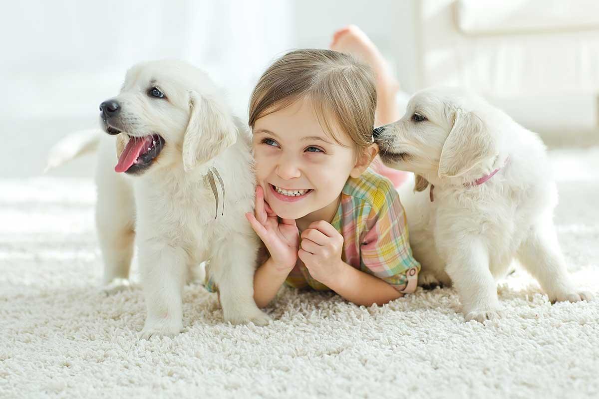 Carpet, Kid and Pet